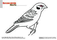mewarnai-gambar-10-burung-gereja1.jpg