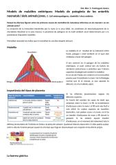 Models entèrics.docx